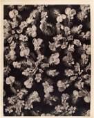 1799: KARL BLOSSFELDT - Original vintage photogravure