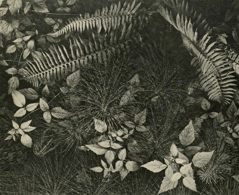 10: ANSEL ADAMS - Original vintage photogravure
