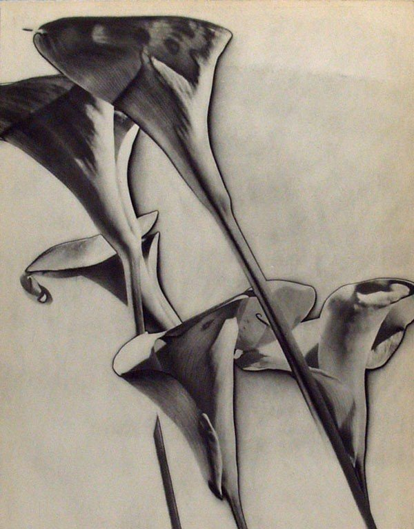 1044: MAN RAY - Original vintage photogravure