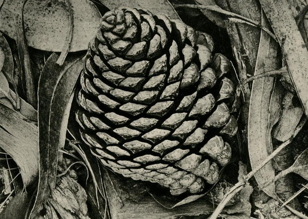 13: ANSEL ADAMS - Original vintage photogravure