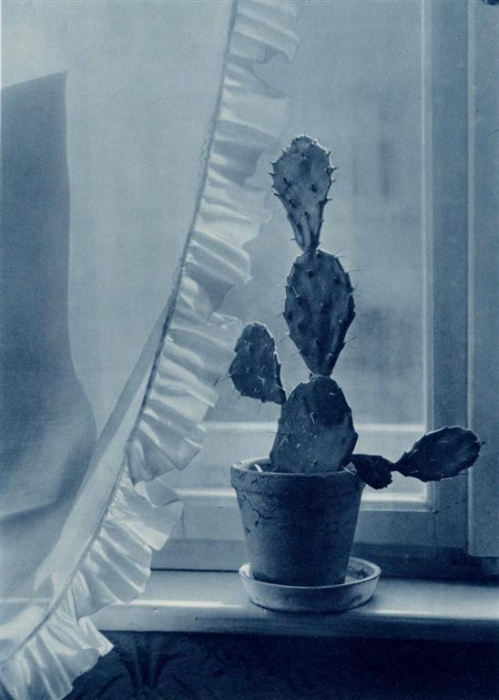 1021: JAN LAUSCHMANN - Original vintage photogravure