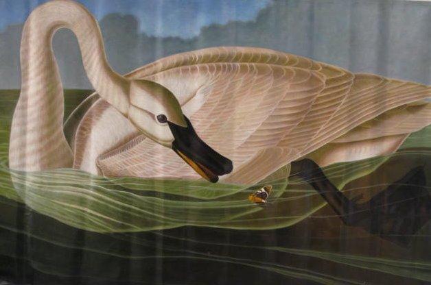 JOHN JAMES AUDUBON [AFTER] - Oil on canvas