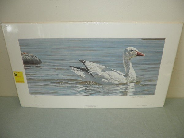 5: Proud Swimmer - Snow Goose 19 / 950