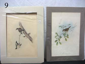 9: Two lithographs:  J. Gould & H.C. Richter Sittella L