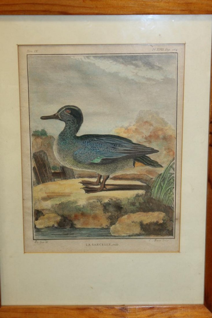 (4) early framed duck prints in pine frames, image is - 2