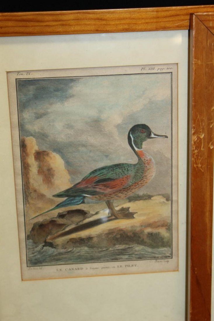 (4) early framed duck prints in pine frames, image is - 3