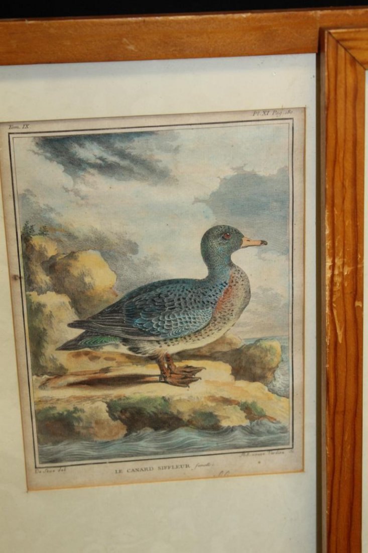 (4) early framed duck prints in pine frames, image is - 4