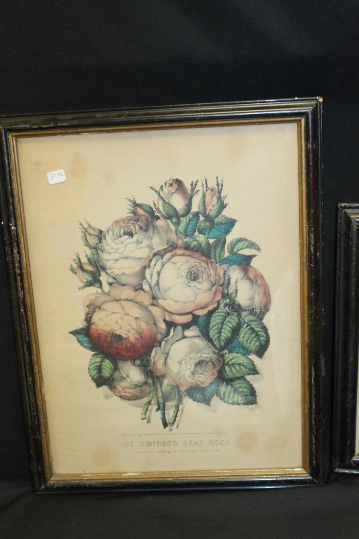 Currier & Ives prints:  The Hundred Leaf Rose (1870, - 3