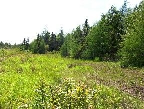 954334: Lake County Michigan Lot - Free and Clear!