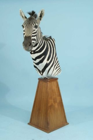 10: ZEBRA TROPHY ON WOODEN PLINTH