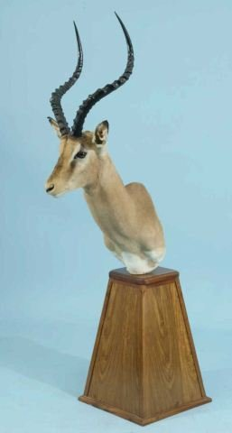 15: IMPALA TROPHY MOUNTED ON WOODEN PLINTH