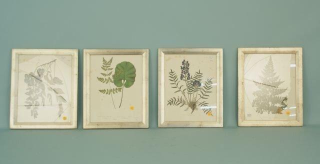 197 four assorted framed botanical prints