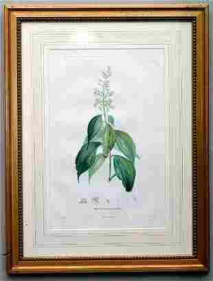 8 Botanical Engravings, 19th c.
