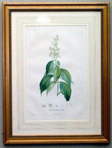 20: 8 Botanical Engravings, 19th c.