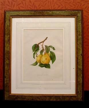 Six Framed Botanical Prints