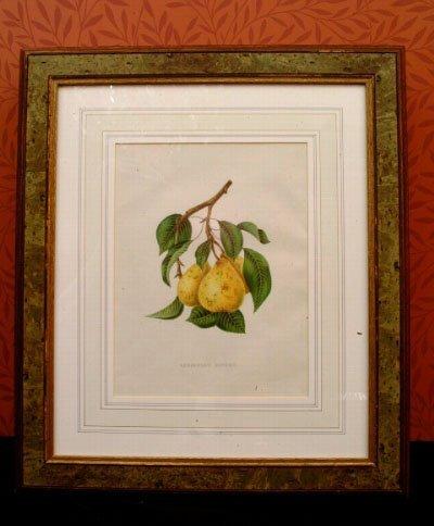 395: Six Framed Botanical Prints