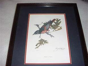 """Baltimore Oriole pic """"The Pride of Maryland"""""""