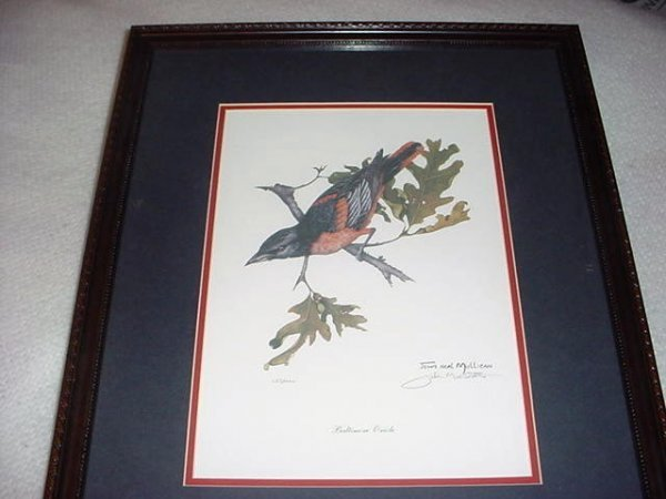 "2506233: Baltimore Oriole pic ""The Pride of Maryland"""