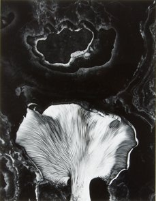 6: Paul Caponigro, 1962. Black and white photograph