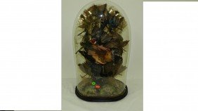 VICTORIAN TAXIDERMY BIRDS IN GLASS DOME Late 19th