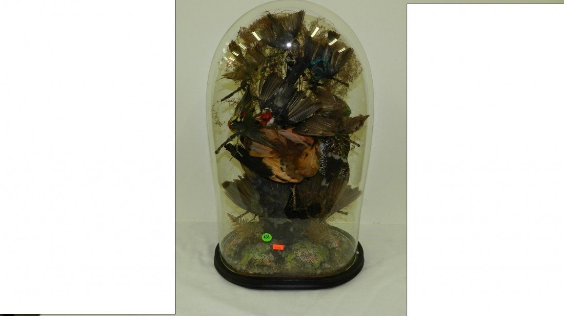 438: VICTORIAN TAXIDERMY BIRDS IN GLASS DOME Late 19th
