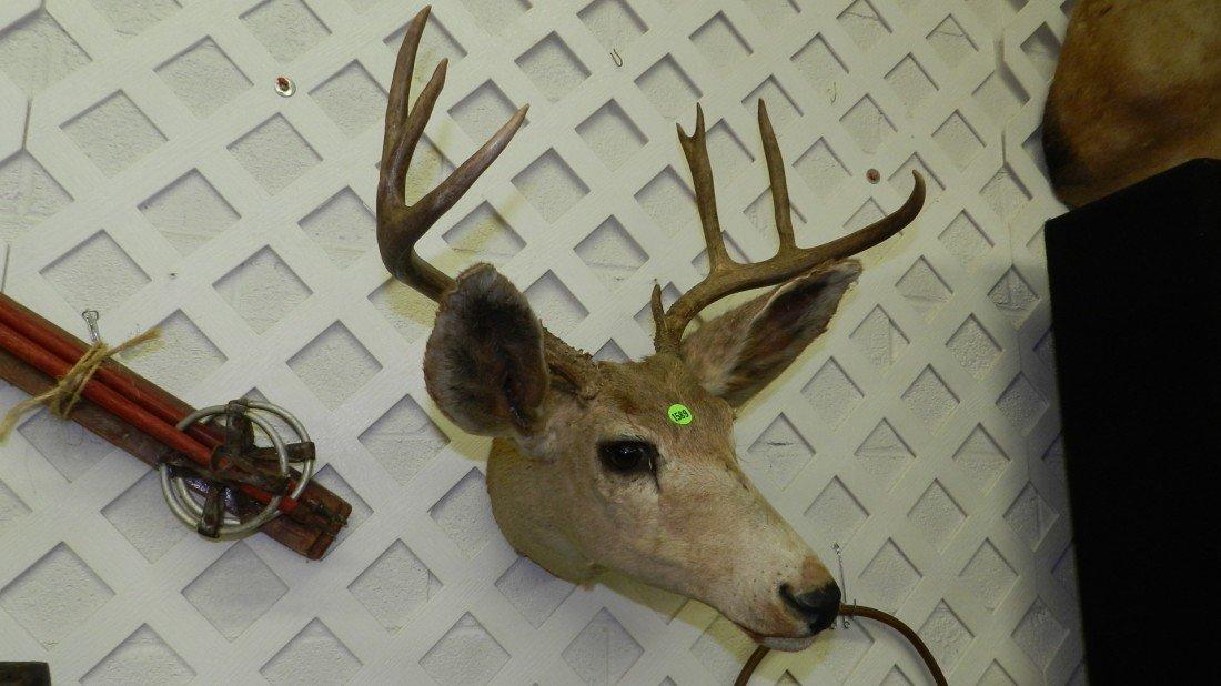 1589: deer head