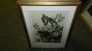 130: John J. Audubon marked ,framed and matted bird & f