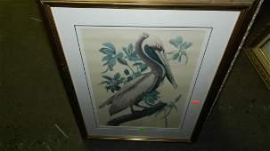 134: John J. Audubon marked ,framed and matted bird & f