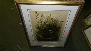 135: John J. Audubon marked ,framed and matted bird & f