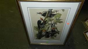 138: John J. Audubon marked ,framed and matted bird & f