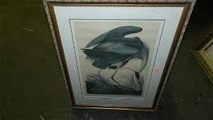 139: John J. Audubon marked ,framed and matted bird & f