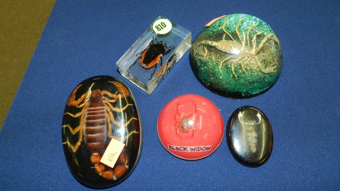 810: collection of bugs paperweights
