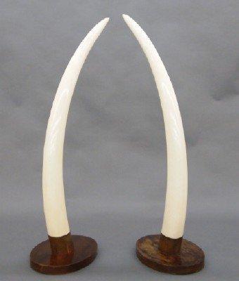 Pr Ivory Tusks