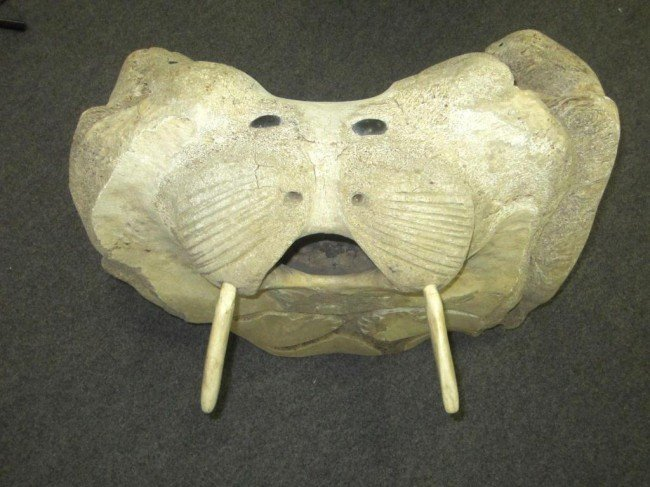 Very large inuit carved whale bone sculpture lot
