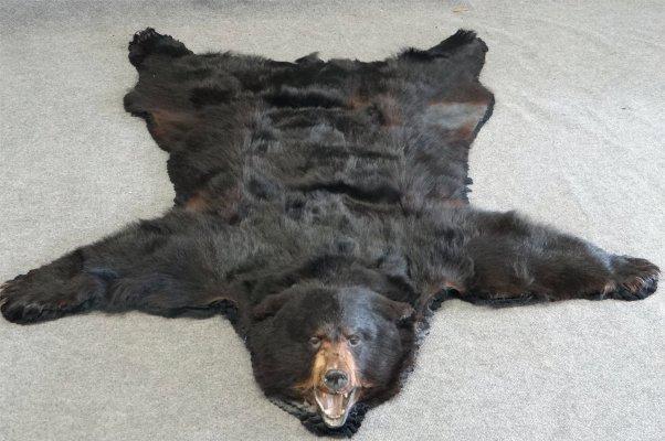 Bear Skin Rug Lot 90