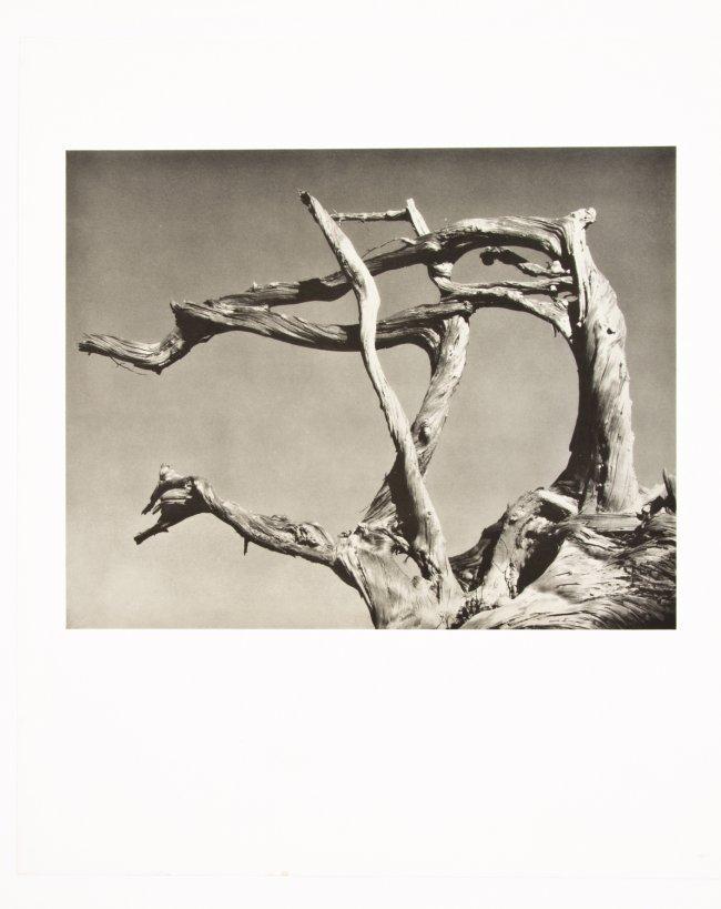 WESTON, Edward / My Camera On Point Lobos 1950 Photography 1st edition Daybook