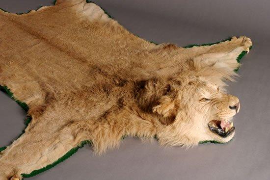 395 A Female Lion Skin Rug Lot 395