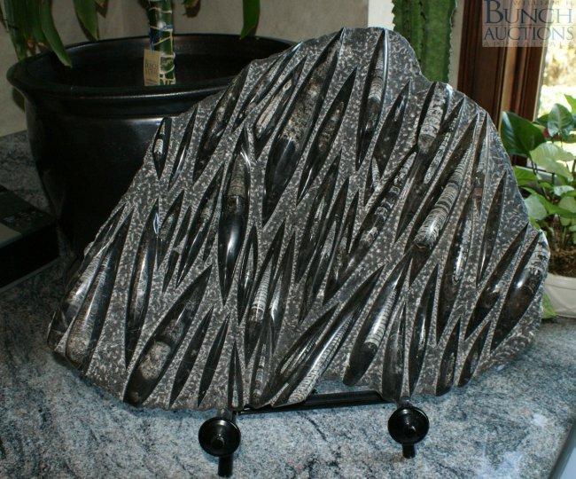 Carved Stone Slab : Carved black stone slab with multiple fossil format