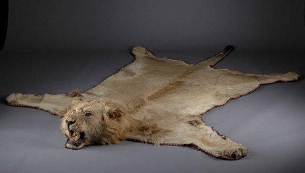 Lion Skin Rug Image Tips
