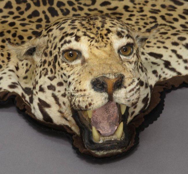 Jaguar Skin Rug : Lot 165