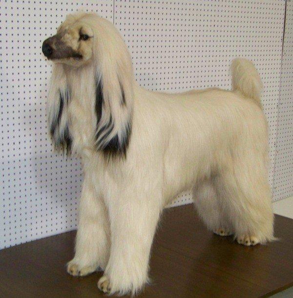 178 life size avanti afghan hound dog stuffed animal lot 178. Black Bedroom Furniture Sets. Home Design Ideas