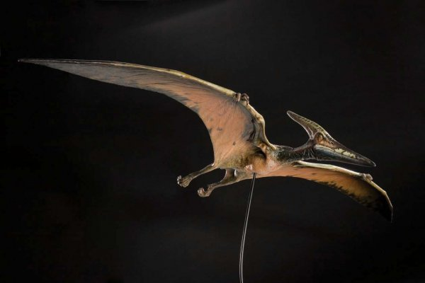 Jurassic Park 3 Pteranodon | www.imgkid.com - The Image ...