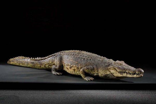 Lake Placid 3 Crocodile Www Imgkid Com The Image Kid